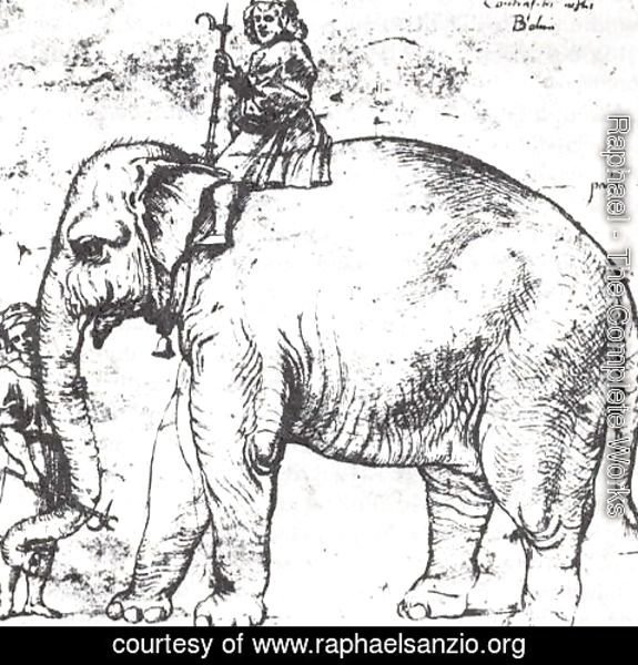 Raphael - Hanno, The Pope's Leo X Elephant